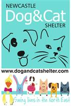 Newcastle Dog and Cat Shelter