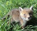 Farplace Animal Rescue Great Run 2014 page